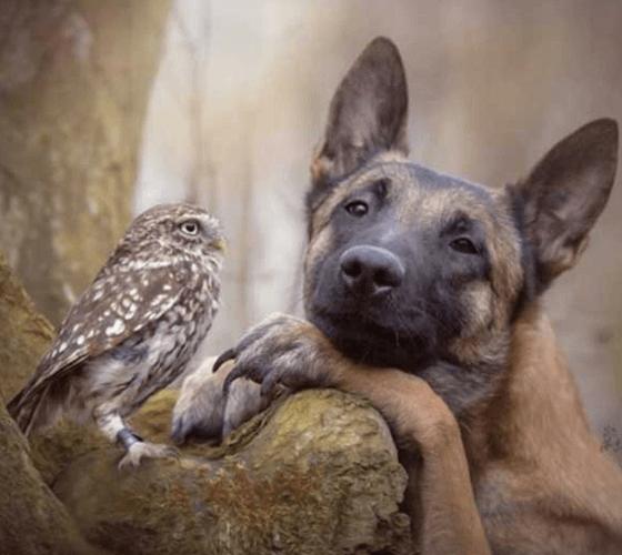 Uma coruja e um cachorro fizeram o ensaio mais fofo que você vai ver hoje