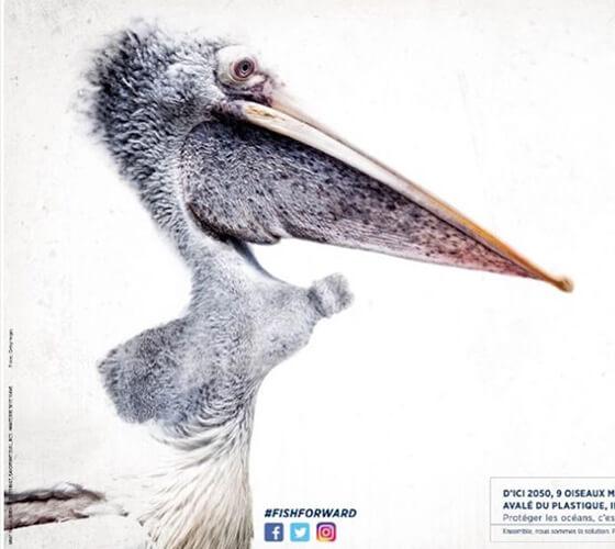 Campanhas de conscientização para o WWF