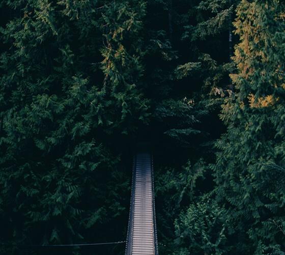 Fotos de florestas