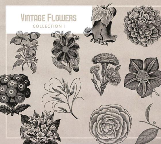 Vetores de elementos florais #5