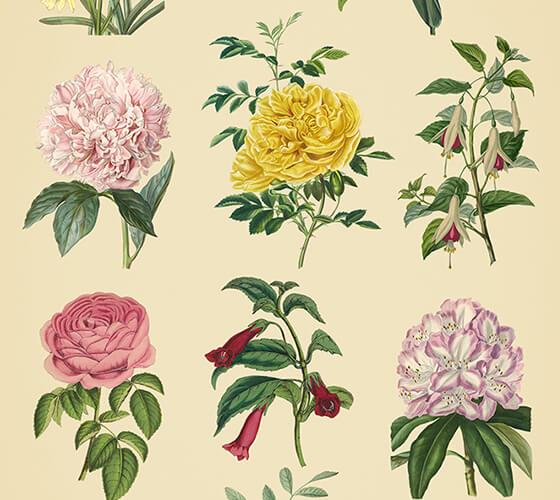 Vetores de elementos florais #3